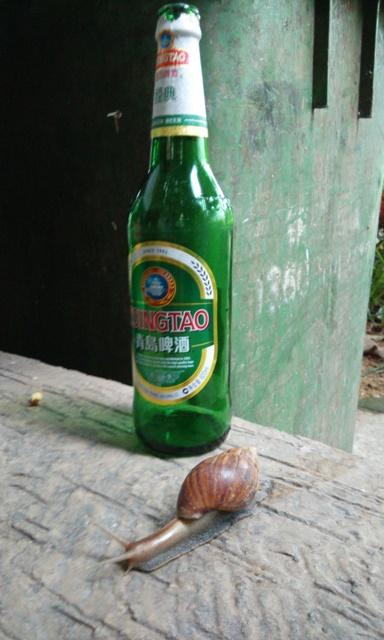 대륙의 달팽이